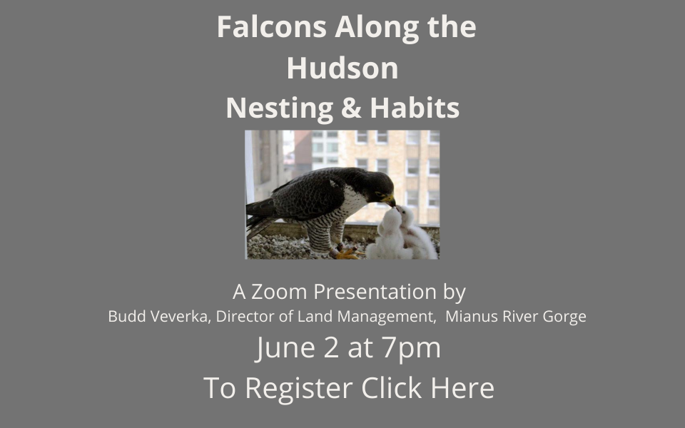Falcons slide